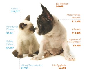 120123-PolicyPoint-PetPlanBrochure.indd